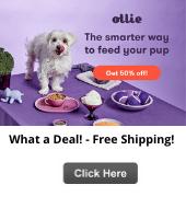 Ollie pet food sale