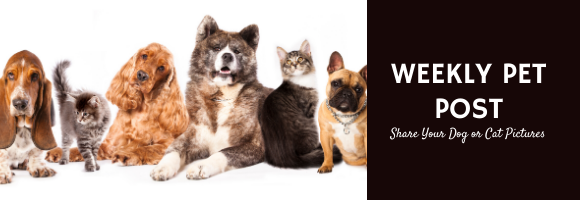 Post your dog or cat pictures on our Weekly Pet Post!